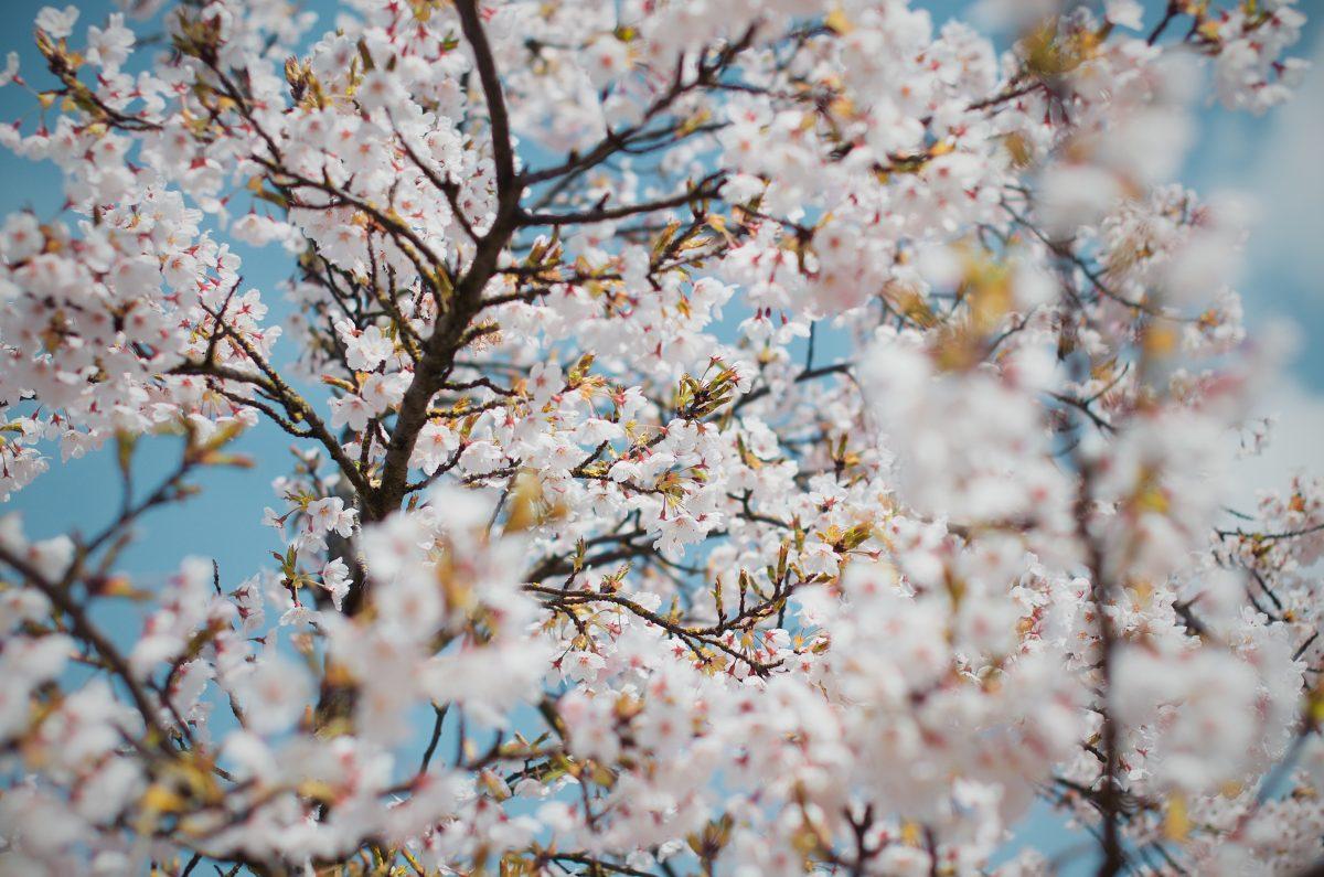 Ökologischer Frühjahrsputz: Unsere Tipps Für Mehr Umweltfreundlichkeit Im Haushalt