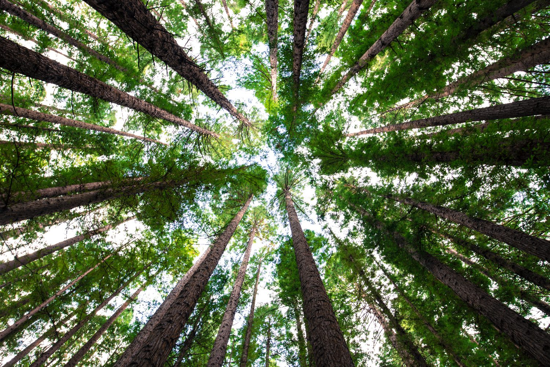 Ein sattgrüner Wald aus der Froschperspektive