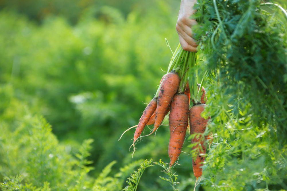 """""""Die Landwirtschaft Muss Intensiviert Werden – Aber Nachhaltig"""""""