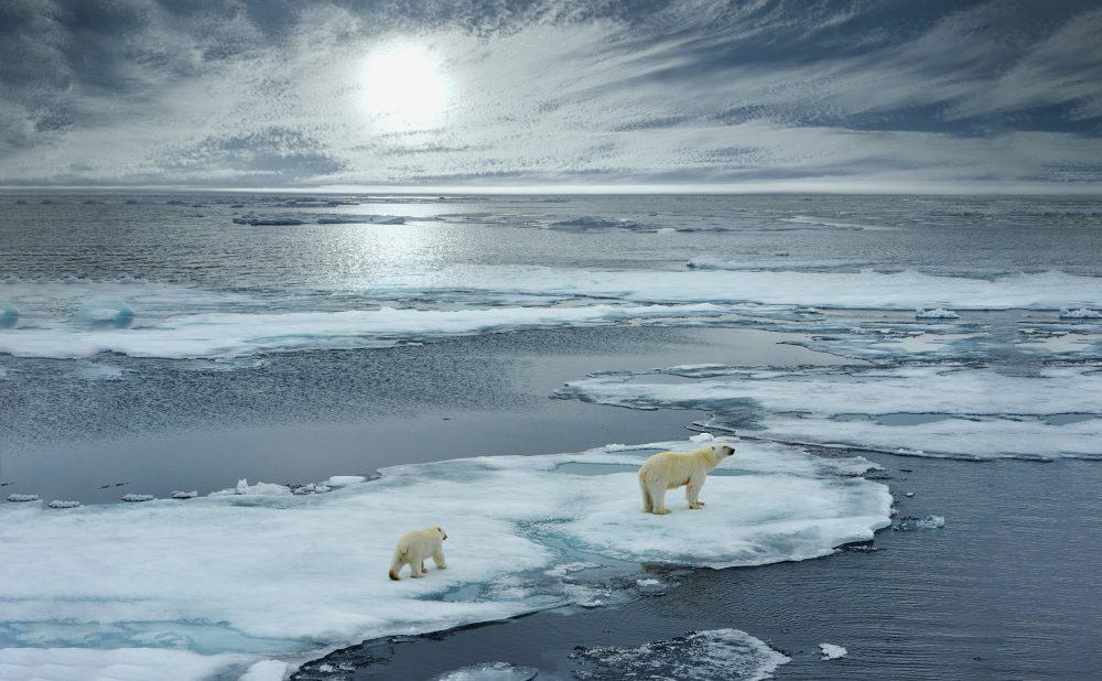 Fünf Dringliche Öko-Debatten, Die Niemand Führt