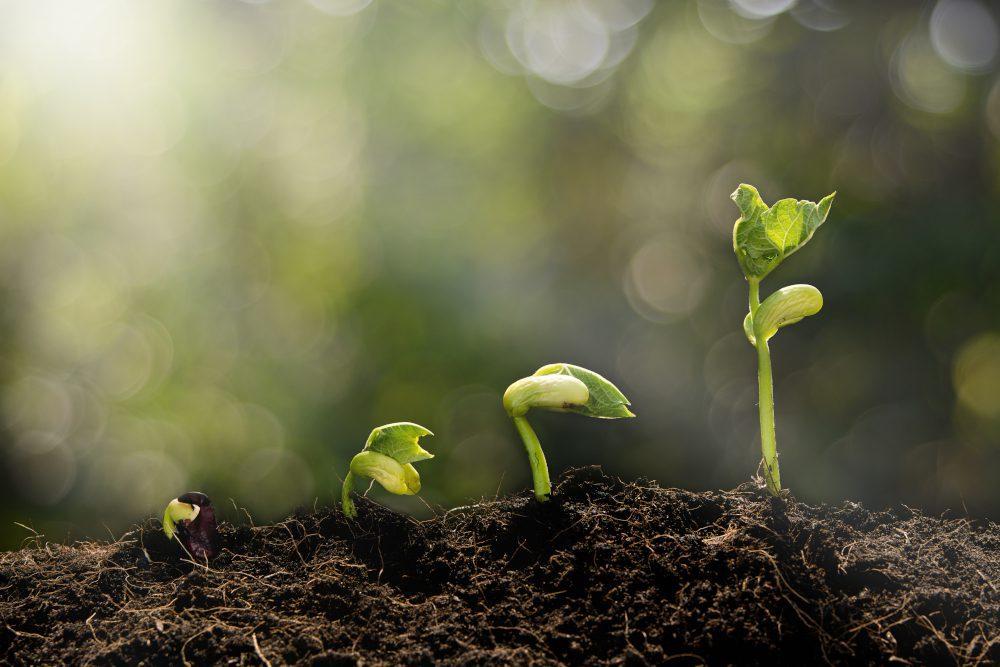 Nachhaltig Investieren: First Steps