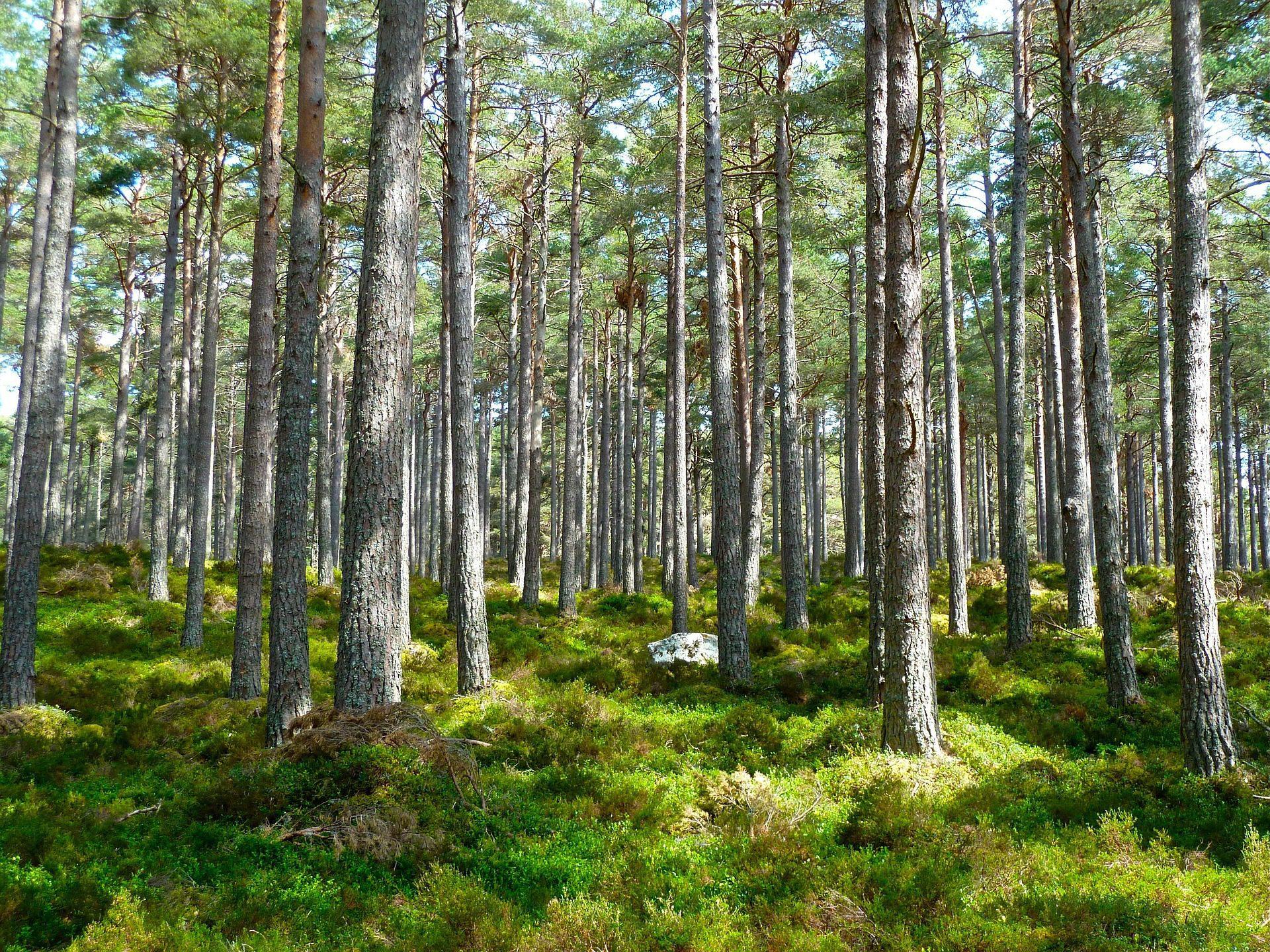 """Anpassung An Den Klimawandel: """"Wir Brauchen Naturnahe Wälder"""""""
