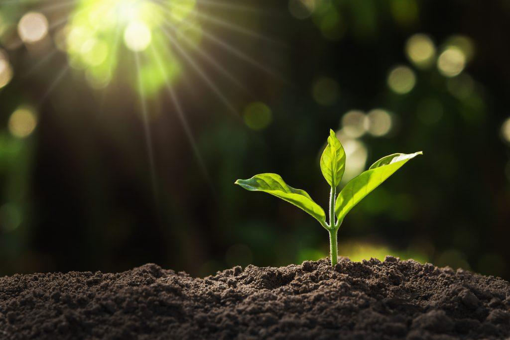 Wachsende Pflanze (Symbolbild)