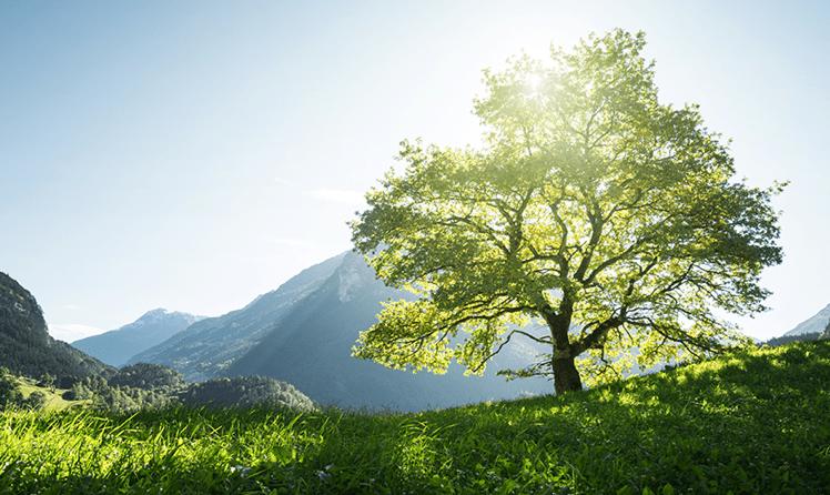 Webinar Aktienfonds Baum