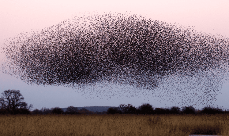 Webinar Crowdinvesting Vogelschwarm
